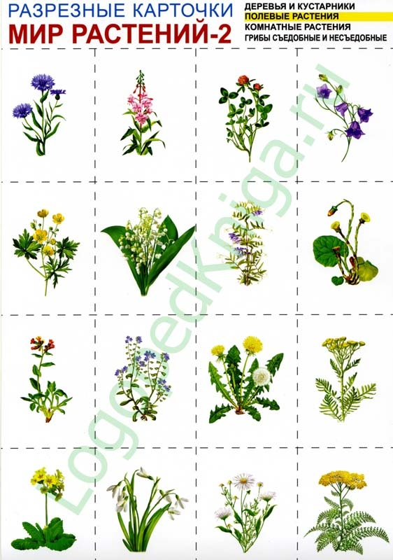 Полевые растения комнатные растения