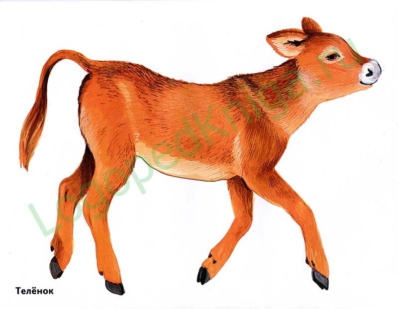 Картинки домашних животных для детей распечатать цветные - 2ef